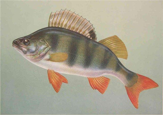 Рыбалка на окуня на подмосковном озере.